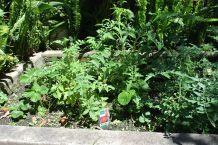 herb garden Karapuz